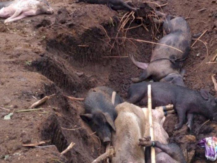 Kemenkes Waspadai Potensi Penyebaran Virus Nipah di Indonesia