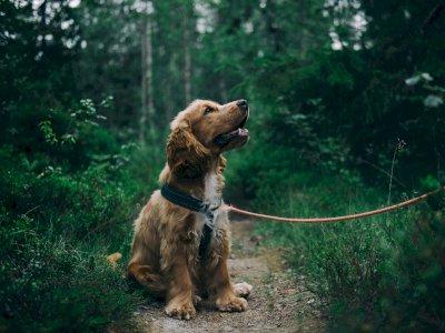 Fakta Atau Mitos Anjing Melolong Karena Melihat Makhluk Halus? Ini Dia Faktanya