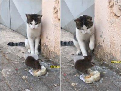 Kucing ini Malah Kaget Saat Lihat Tikus Makan di Depannya, Netizen: Gak Punya Harga Diri