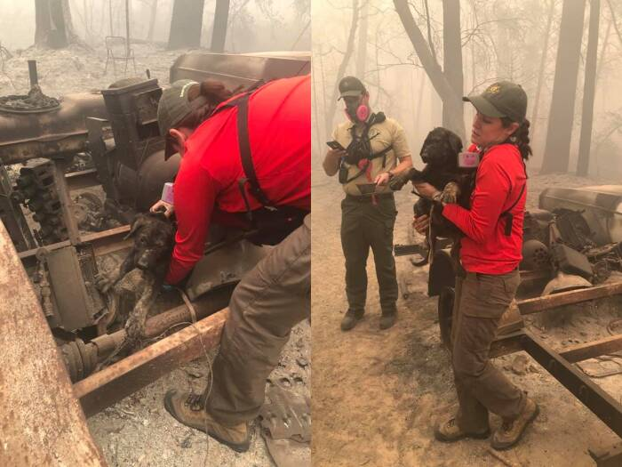 anjing yang selamat dari kebakaran