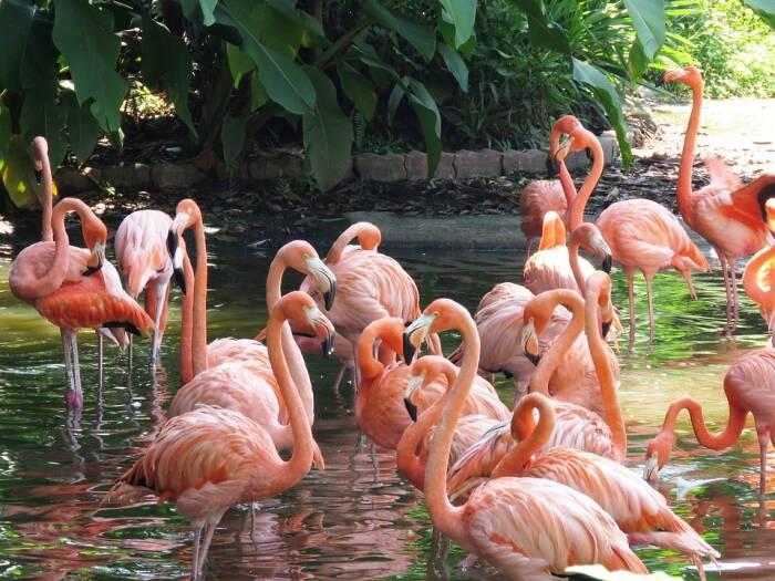 Sekelompok burung Flamingo.