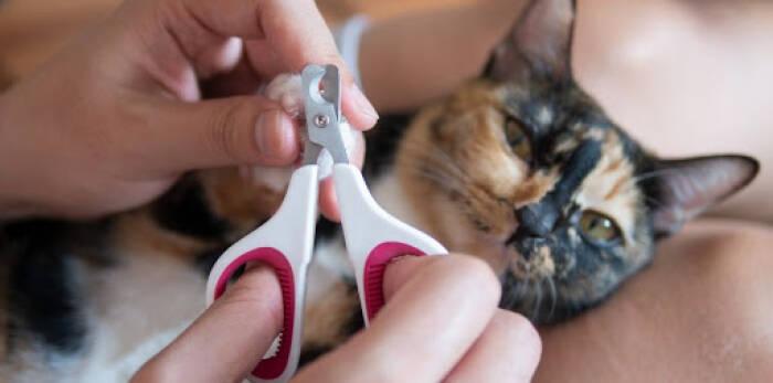cara gunting kuku kucing yang benar