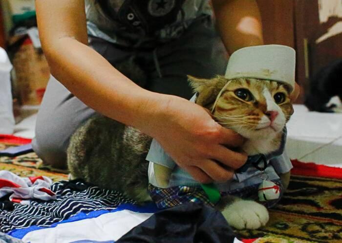 Seekor kucing memakai kostum cosplay di Bogor